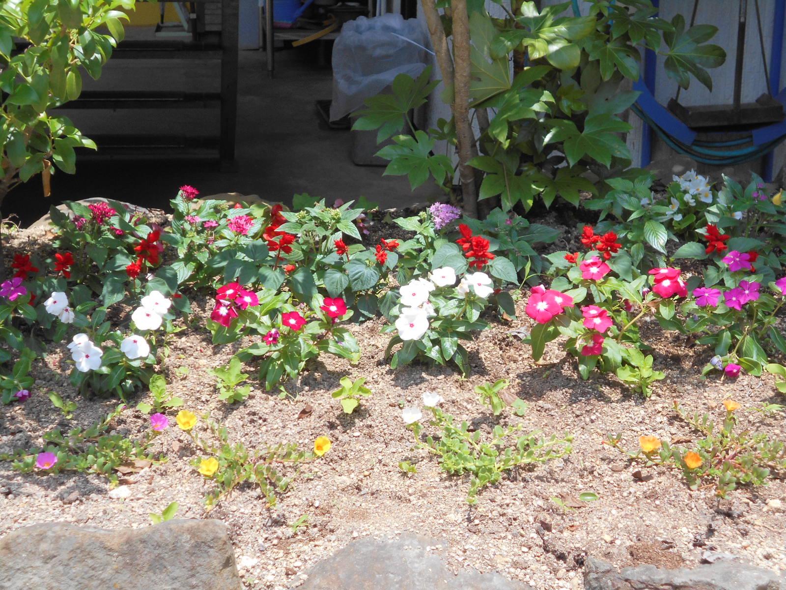 花壇の花001