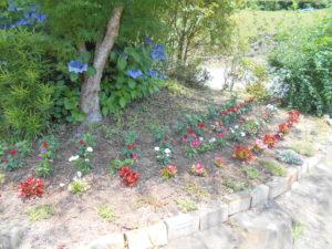 花壇の花002